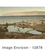 #12878 Picture Of Driftwood And Puddle On The Shore Of The Dead Sea
