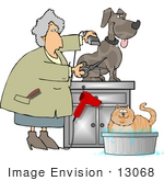 #13068 Senior Caucasian Woman Grooming A Dog And Cat Clipart