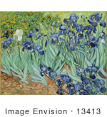#13413 Picture of the Painting of Irises by Vincent van Gogh by JVPD