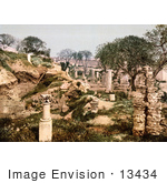 #13434 Picture Of A Garden In The Ruins Of Carthage Tunisia