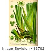 efect acorus calamus of insect