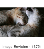 #13751 Picture of a Male Kitten Biting a Female's Neck by Jamie Voetsch