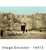 #14413 Picture Of Sheep In Front Of The Damascus Gate Jerusalem