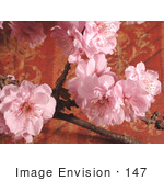 #147 Image of Pink Cherry Blossoms by Jamie Voetsch