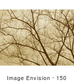 #150 Photograph of Bare Tree Branches in Sepia Tone by Jamie Voetsch