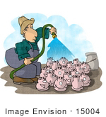 #15004 Caucasian Pig Farmer Washing His Pigs Clipart