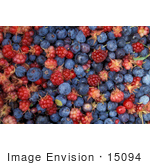 #15094 Picture Of A Berry Background Of Blueberries And Raspberries