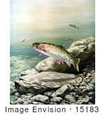 #15183 Picture Of Cutthroat Trout (Oncorhynchus Clarki)