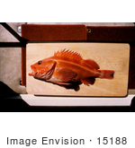 #15188 Picture Of A Yellow Rockfish On A Board