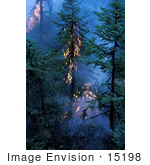 #15198 Picture Of A Forest Fire With Flames In Trees