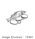 #15491 Picture Of A Tippecanoe Darter (Etheostoma Tippecanoe)