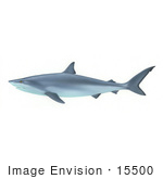 #15500 Picture Of A Shark