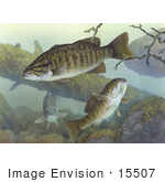 #15507 Picture Of Smallmouth Bass (Micropterus Dolomieu)