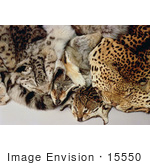 #15550 Picture Of Illegal Wildlife Trade Skins