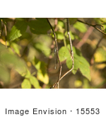 #15553 Picture Of A Dragonfly On A Twig