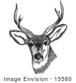 #15580 Picture Of A Deer With Antlers