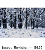 #15629 Picture Of Winter In The Forest