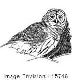 #15746 Picture Of An Owl Illustration