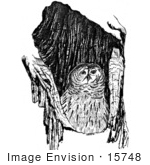 #15748 Picture Of A Barrow Owl (Athene Cunicularia)