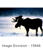 #15946 Picture Of A Moose In Water On A Foggy Morning