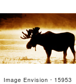#15953 Picture Of A Moose In Water On A Foggy Morning