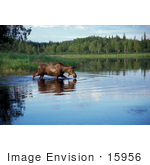 #15956 Picture Of A Moose In A Lake Alaska