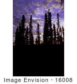 #16008 Picture Of Tall Trees In Silhouette At Sunset Innoko National Wildlife Refuge