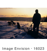 #16023 Picture Of A Man And Dogs Sledding At Sunrise