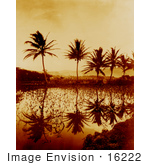 #16222 Picture Of Taro Plants And Palm Trees Reflecting In Water At Sunset Hawaii