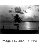 #16223 Picture Of A Palm Tree At Night Biscayne Bay