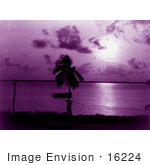#16224 Picture Of Palm Tree And Purple Sunset At Biscayne Bay Miami Florida