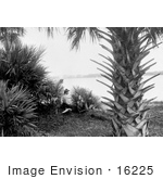 #16225 Picture Of Women Under A Palm Tree On A Beach In Miami