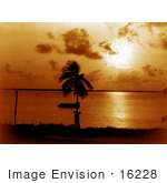 #16228 Picture Of A Palm Tree Silhouetted Against An Orange Sunset At Biscayne Bay