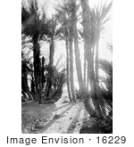 #16229 Picture Of A Man Sitting Under Palm Trees