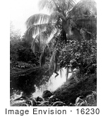 #16230 Picture Of A Palm Tree By A Pond Panama