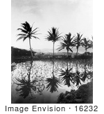 #16232 Picture of Elephant Ear Plants and Palm Trees Reflecting in Water, Hawaii by JVPD