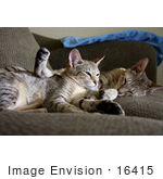 #16415 Picture of Cats Cuddling on a Couch by Jamie Voetsch