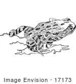 #17173 Picture Of A Red-Legged Frog