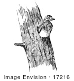 #17216 Picture Of A Hen Wood Duck (Aix Sponsa) Nesting In A Tree