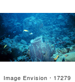 #17279 Picture Of Ablue Reef Scene With A Large Barrel Sponge