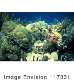 #17331 Picture Of A Shallow Water Reef Scene With Corals And Sea Life