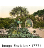#17774 Photo Of Ivy Covered Wall And Archway Over A Path In The Tresco Abbey Gardens Scilly Isles Cornwall England