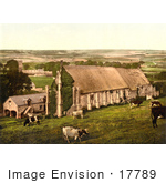 #17789 Photo Of Cows Grazing Near The Abbey Barn In Abbotsbury England