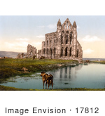 #17812 Photo Of Cows And Horses Grazing At Whitby Abbey In Yorkshire England