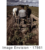 #17861 Photo Of A Farmer Riding A Horse Drawn Plough To Turn Up Pinto Beans