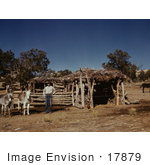 #17879 Photo Of A Farmer With His Donkeys Near A Log Barn