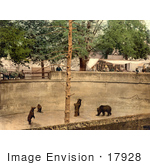 #17928 Picture Of Bears In A Pit At A Zoo Switzerland
