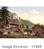 #17935 Picture Of Cows On A Farm Near A Barn Emsigenalp With Sennhutten Pilatus Switzerland