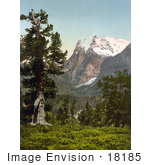 #18185 Photo Of A Forest With A View Of Wetterhorn Mountain Bernese Oberland Switzerland