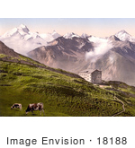#18188 Photo Of Cattle Grazing Near A Building In The Village Of Leukerbad Leuk Valais Switzerland